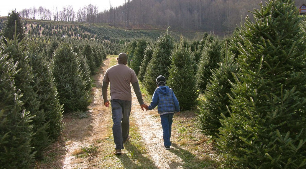 christmas tree farms - Christmas Tree Farms For Sale