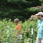 Ten Acre Garden, U Pick berries