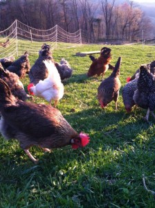 Shady Brook Farm. Guest Blog Post