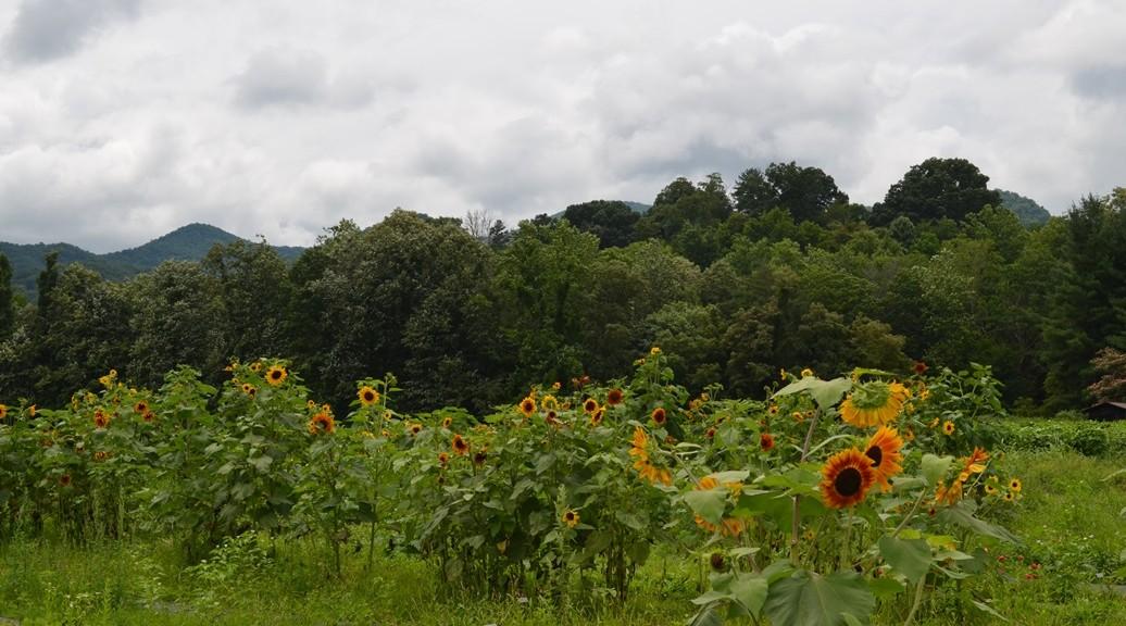 Ten Acre Garden