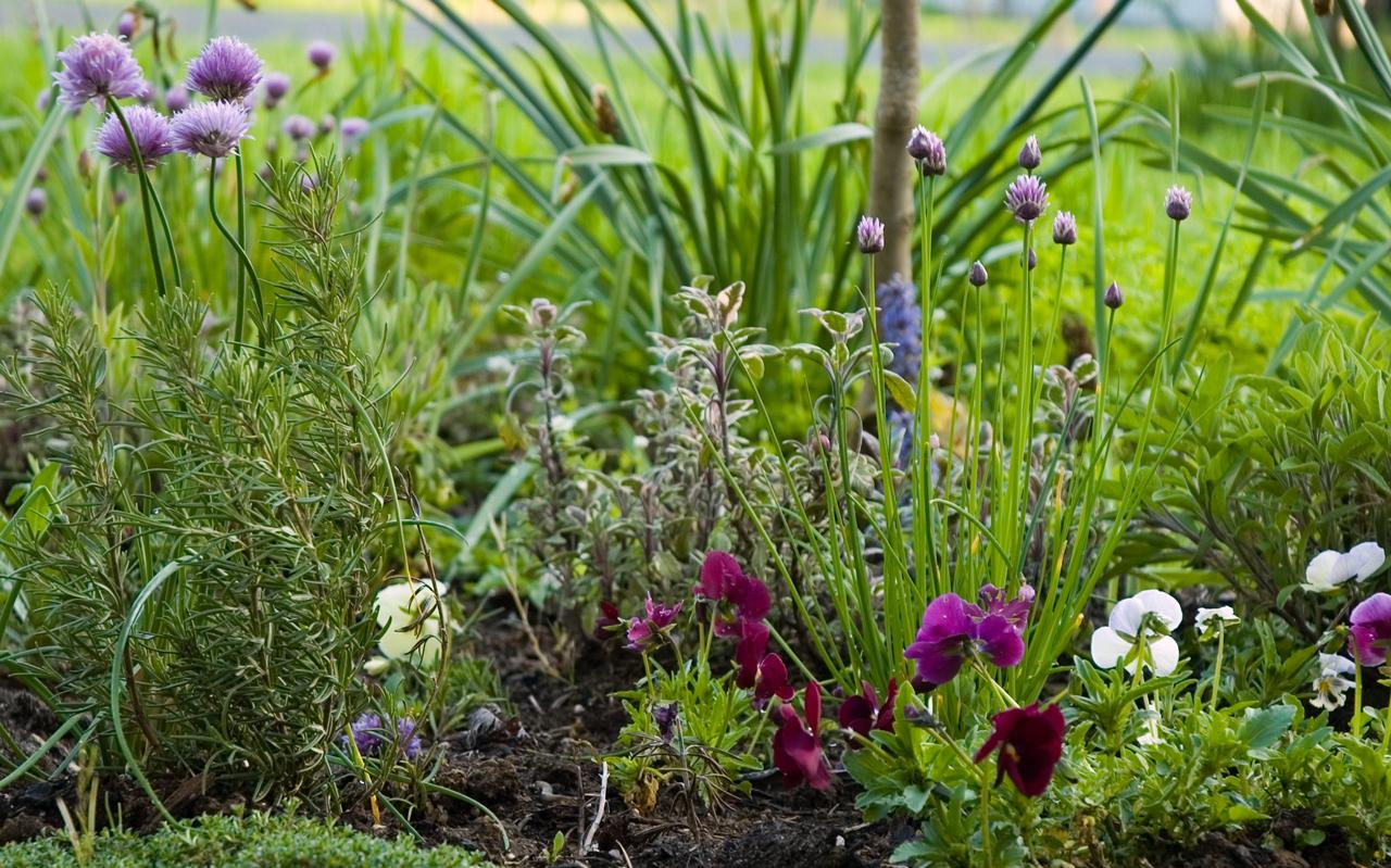 Fresh Herb Garden : Cooking with garden fresh herbs buy haywood