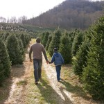 Choose & Cut Christmas trees