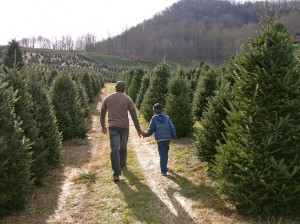 Boyd Tree Farm (Photo courtesy of Ashley Rice at Visit NC Smokies)